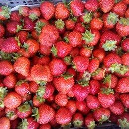 Рабочие - Сборщики ягод в ягодное хозяйство, 0