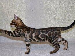 Кошки - Бенгальские котята с клубными документами, 0