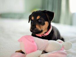 Собаки - Щенок в добрые руки, 0