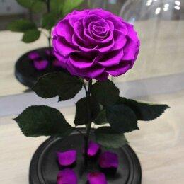 Цветы, букеты, композиции - Вечная роза, 0