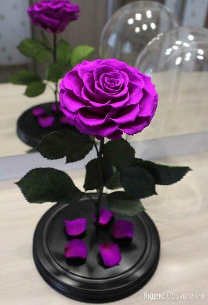 Вечная роза по цене 3990₽ - Цветы, букеты, композиции, фото 0