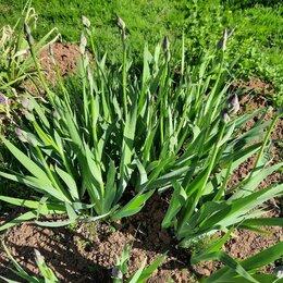 Луковичные растения - растения для сада, 0