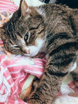 Кошки - Котя ищет дом, 0