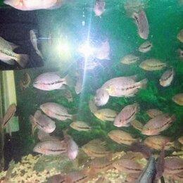 Аквариумные рыбки - рыбки, 0