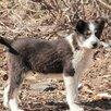 Ищут дом и любящих хозяев! по цене даром - Собаки, фото 4