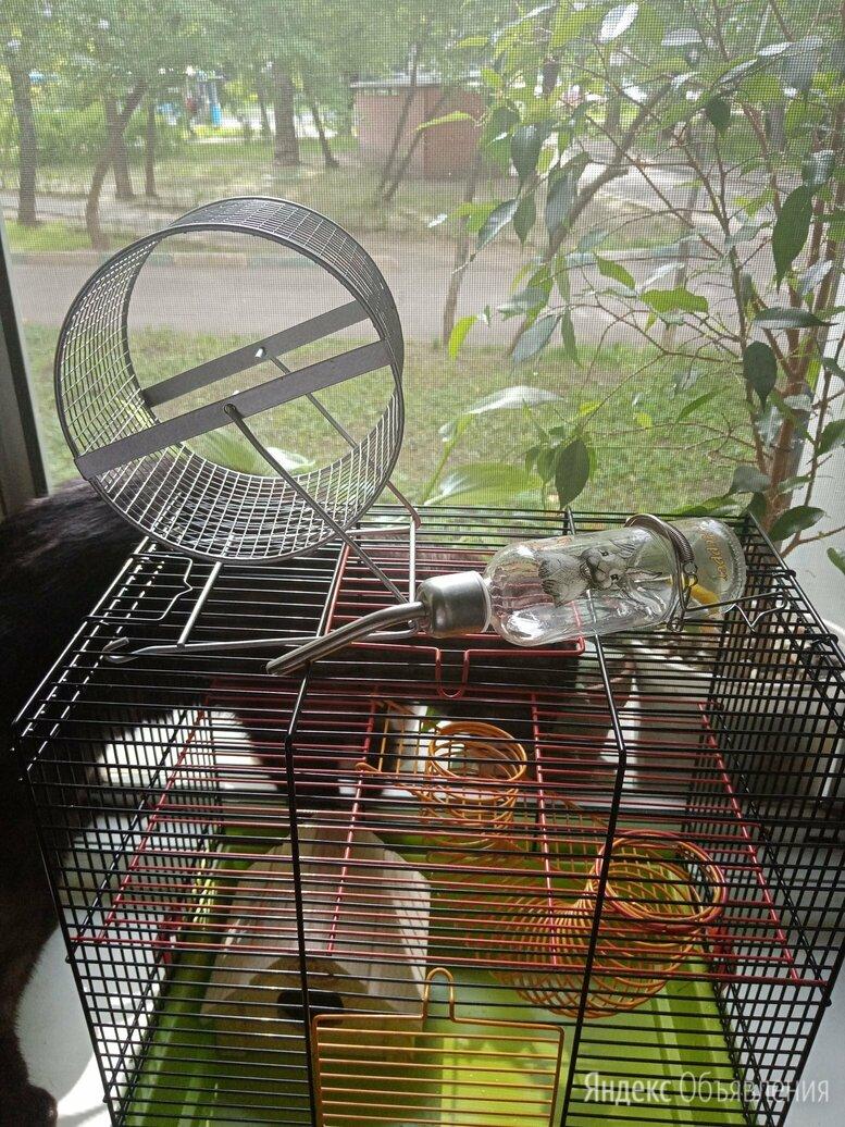 Клетка для грызунов +набор по цене 2000₽ - Клетки и домики , фото 0