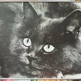Картины, постеры, гобелены, панно - Фотокартина СССР, 0