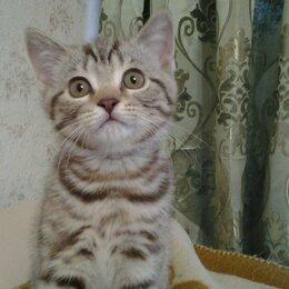 Кошки - Британские котята с документами, 0