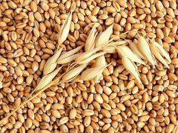 Товары для сельскохозяйственных животных - Продам зерно, зерносмеси, кормовые добавки, 0