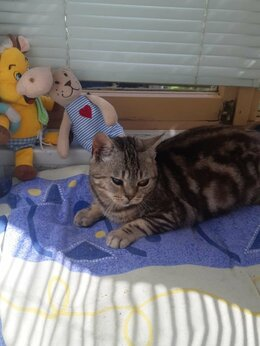 Кошки - Особенный котенок-подросток 10 месяцев, 0