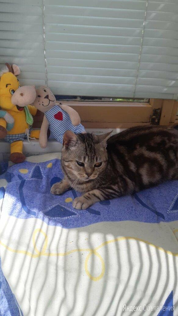 Особенный котенок-подросток 10 месяцев по цене 10₽ - Кошки, фото 0