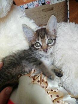 Кошки - Котята в добрые руки, бесплатно, 0