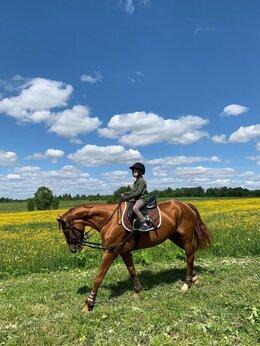 Конный спорт - Верховая езда, конные прогулки, 0