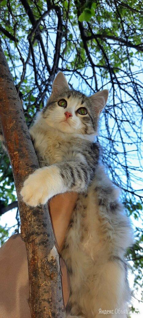 Котёнок по цене даром - Животные, фото 0