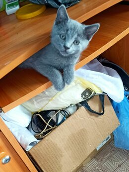 Кошки - Отдам котят., 0