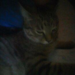 Животные - Пропал кот Джони, 0