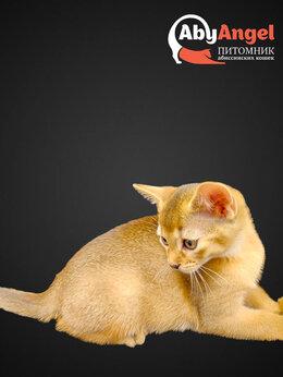 Кошки - Абиссинский мальчик , 0