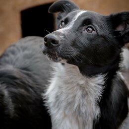 Собаки - Игривый малыш Рогалик ищет дом!!!, 0