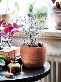 Горшки, подставки для цветов - Новые кашпо для растений Ботаниск Икеа, 0