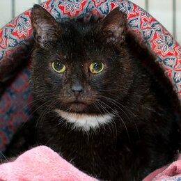 Кошки - Кот Воланд 3 года грустил после смерти хозяина... Сейчас он в приюте и ждёт вас, 0