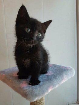 Кошки - Красотка в добрые руки, 0