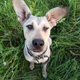 Собаки - Собака в дар 9 месяцев, 0