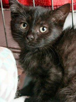 Кошки - Ласковый котенок Спирит, 0