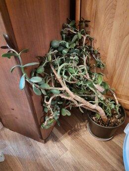 Комнатные растения - Цветок 4, 0