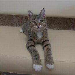 Кошки - Полосатый котик Морис, 0