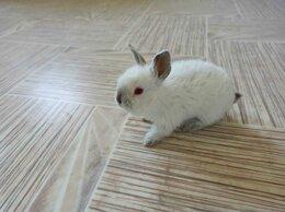 Кролики - Крольчата калифорнийской породы, 0