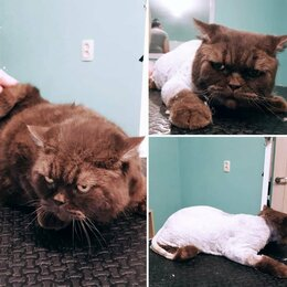 Груминг и уход - Груминг собак и кошек , 0