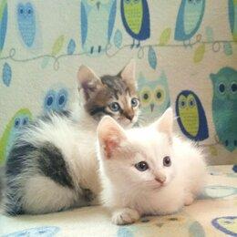 Кошки - Отдадим котят в хорошие руки., 0