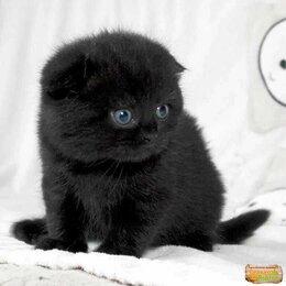 Кошки - Магический котик, 0