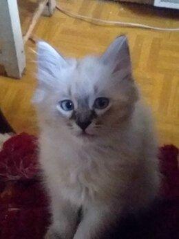 Кошки - Пушистое чудо в дом, 0