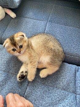 Кошки - Кошка, 0