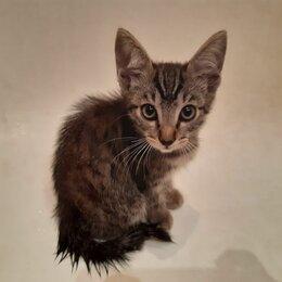 Животные - Котенок, мальчишка, 2 месяца, 0