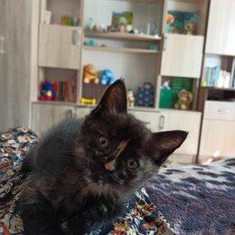 Кошки - Луноликая трехцветная кошечка, 0