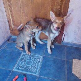 Собаки - Домашние животные. Щенки, 0