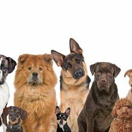 Услуги для животных - Выгул и уход за собаками, 0