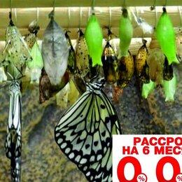 Сельское хозяйство - Высоко рентабельный бизнес ферма Живых Бабочек, 0