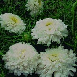 Рассада, саженцы, кустарники, деревья - Цветы многолетние и однолетние для сада, 0