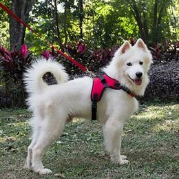 Поводки  - Мягкий регулируемый поводок для собак, размер XL, красный, 0