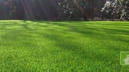 Газоны - Многолетний газон для дачи, дома. Смесь семян., 0