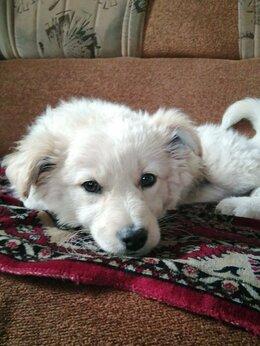 Собаки - Щенка девочку в добрые руки. срочно ищем дом, 0