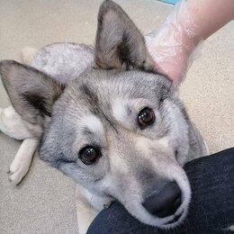 Собаки - Дружелюбная Креветка - Собака в добрые руки, 0