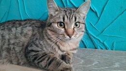 Кошки - Кошечка ищет дом, 0