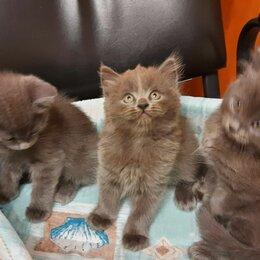 Кошки - Котята ищут хозяев, 0