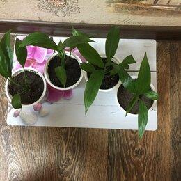 Комнатные растения - Спатифиллум, 0