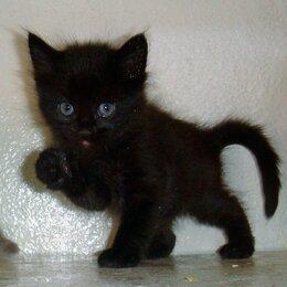Кошки - Черная котейка, 0