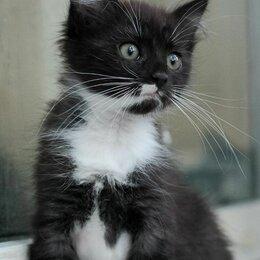 Кошки - Пушистая ласковая заинька домовёнок Леся 2,5 мес, 0